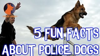 5 Fun Facts about Training Police Dogs
