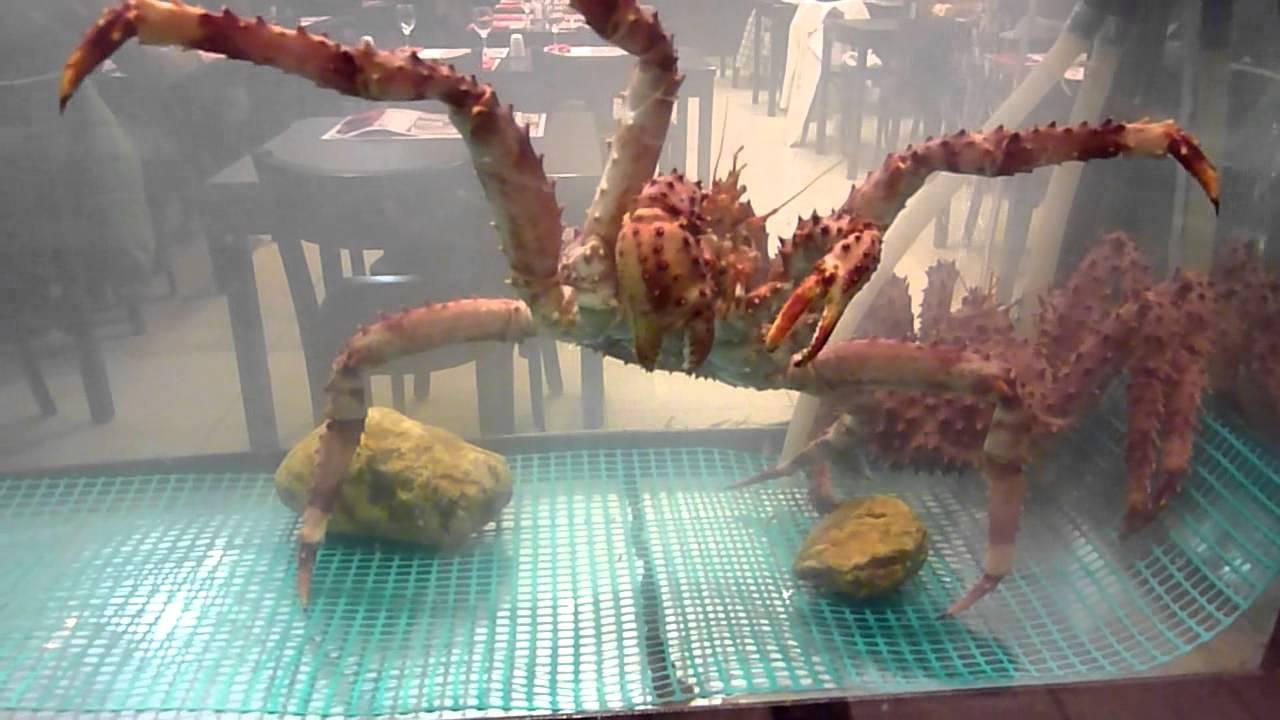 Snow King Crab Crab Walking Youtube