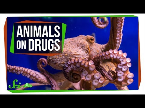 5 Times Scientists Gave Animals Drugs (and What They Learned)