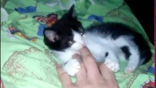 Котёнок кусается