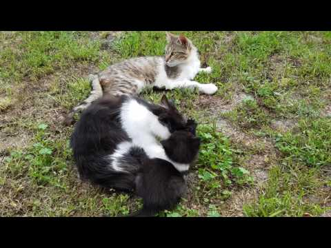Cat Love, mother and son.Small three beautiful cats play on yard.Must see.part 5.Full HD 4K