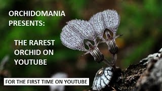 Orchidomania Presents: The Rarest Orchid on YouTube