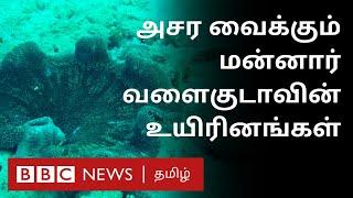 மன்னார் வளைகுடாவின் வியப்பூட்டும் ரகசியம் – சுவாரஸ்ய தகவல்கள் | Gulf of mannar