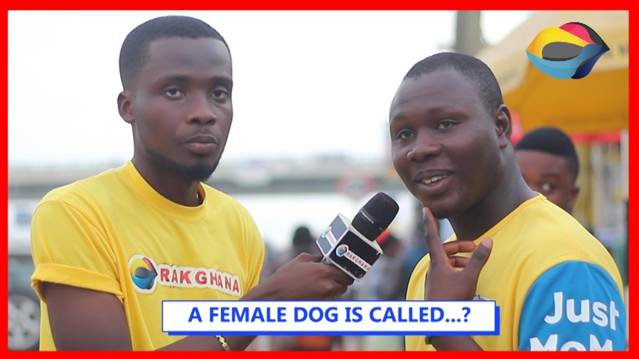 A FEMALE DOG IS CALLED...? | Street Quiz | Funny Videos | Funny African Videos | African Comedy