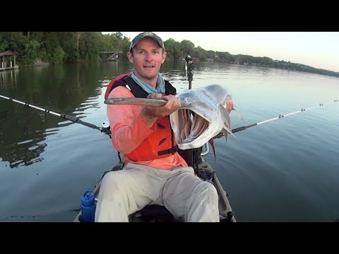 Accidental Catch: Huge Spoonbill Catfish Landed while Kayak Fishing