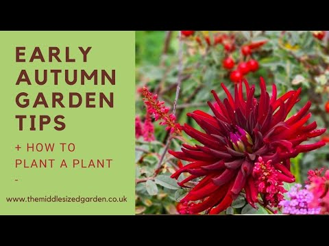 Early autumn garden tips….how to plant a plant
