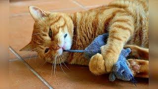 Смешные кошки 2019 Новые приколы с котами и собаками смешные коты приколы 2019 Funny Cats 63