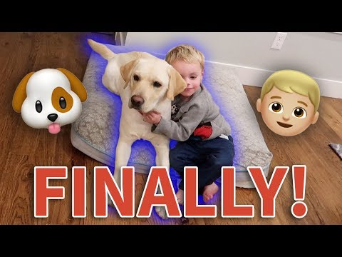 HYPER DOG AND HYPER KID FINALLY CALM DOWN AND PLAY! 😂👦🏼🐶