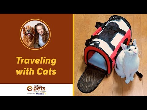 Traveling With Cats