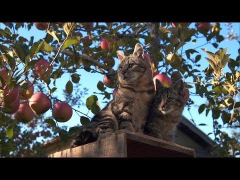 吉岡里帆 世界ネコ歩き CM スチル画像。CMを再生できます。