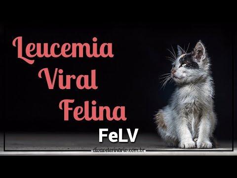 leucemia-viral-felina-(felv)- -divã-veterinário