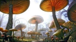Живая тема  Грибное нашествие, грибы галлюциногены