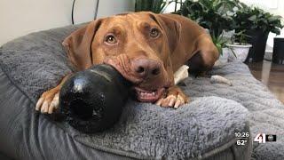 KC Metro Celebrates National Pet Day