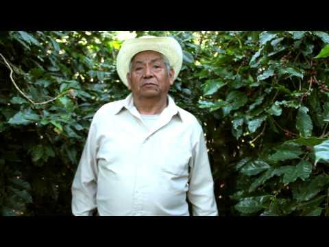 Café en Veracruz MMPS