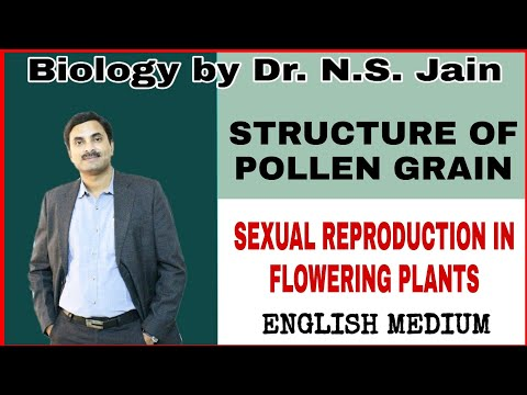 Structure Of Pollen Grain For Class 12th In English