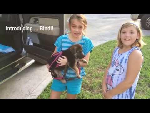 Surprising My Daughter with a German Shepherd Puppy! Meet Bindi!
