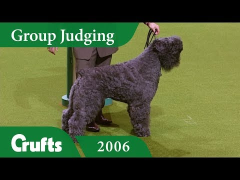 Bouvier Des Flandres wins Working Group Judging at Crufts 2006