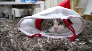 Прикол самый веселый кот 2014 года, приколы про животных онлайн бесплатно, кошки приколы фото