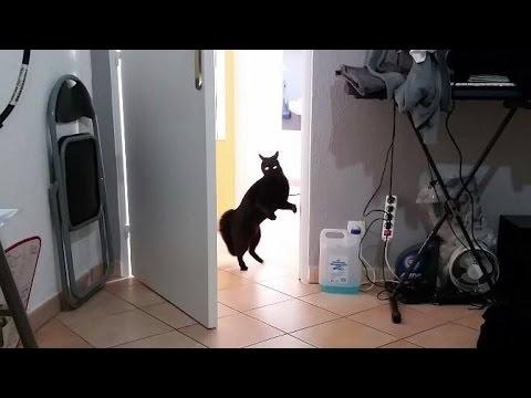 Chat qui fait peur youtube for Chambre qui fait peur