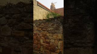 A Foggy Morning in Crail Scotland--Part 1