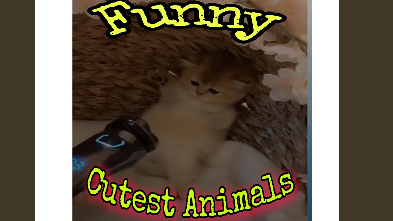 Cute funny animal competion in 2020 i hope you injoy #Cutefunnyanimalsin2020