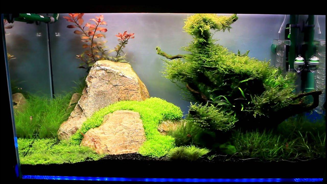 Aquascape HD - YouTube