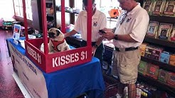 Cute Pugs Waiting To Be Adopted!