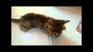 must cry...last moments of kitten after mum hit by car RIP