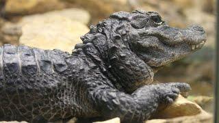25 Endangered Animals We May Lose This Century