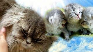ЧТО ТО ПОШЛО НЕ ТАК! Кошка ЗАБОЛЕЛА. Что будет с КОТЯТАМИ?