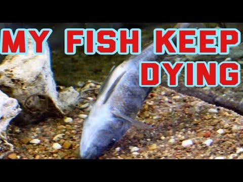 Does Anyone Know Why My Cichlids Keep Dying | I Tested My Water Here Are The Results