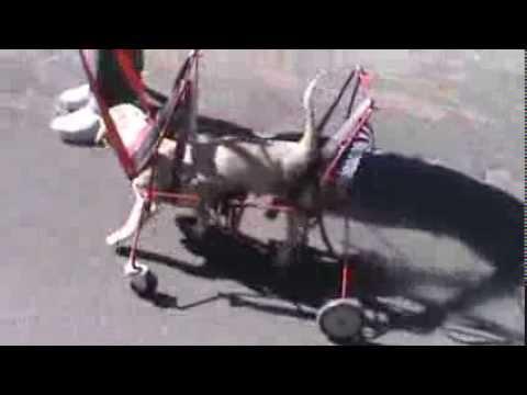 Carrito de 4 llantas para perro discapacitados car can for Sillas para discapacitados