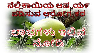 Amla Benefits in Kannada || Amla Amazing Uses Kannada || Top Health Benefits of Amla In Kannada
