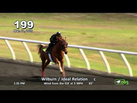 Ocala Breeders' Sales Company Horse Sale March 2015  Hip #1- 304