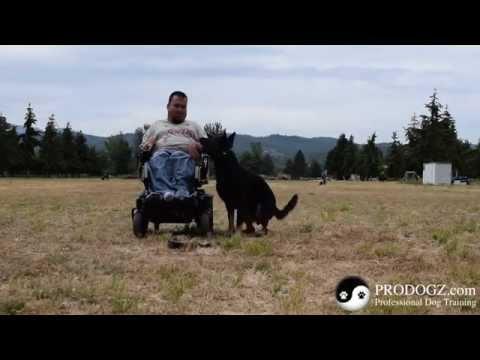 Dog Training Medford Oregon