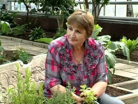 Пряно-ароматические растения