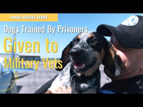 Abandoned dogs transformed by Prisoners to help Military Veterans