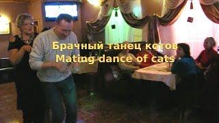"""Прикольный конкурс """"Брачные танцы"""" для вечеринки. Merry contest """"Mating dances of animals"""""""