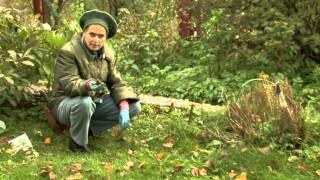 видео Подготовка цветника к зиме