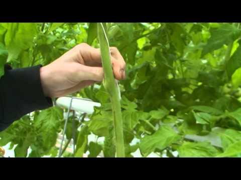 bladsnijden schenkeveld