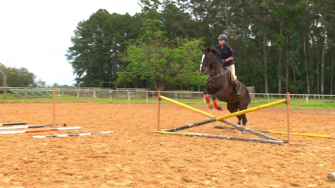 TV UC - Exercícios para cavalo de salto 1 - YouTube 8f770a5b8c9