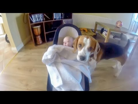 Cute Dog tucks in baby to sleep and  baby returns a favour one year after
