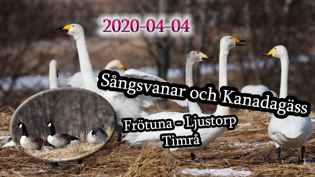 Liga Rancane, Frtuna 257, Fellingsbro | omr-scanner.net