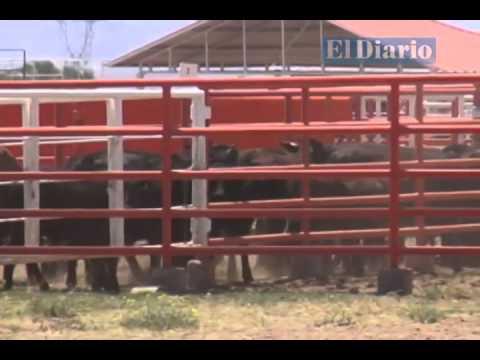 Ganado fue localizado en Durango y tráiler en Chihuahua