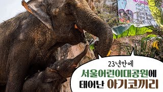 서울어린이대공원 동물원 아기 코끼리 탄생썸네일
