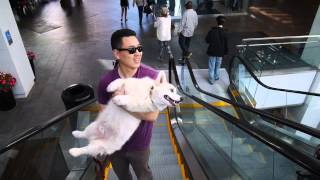 How Winston Takes the Escalator
