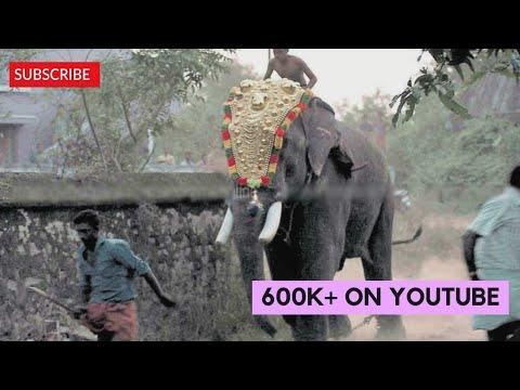 thechikottukavu ramachandran attack in chirakal pooram