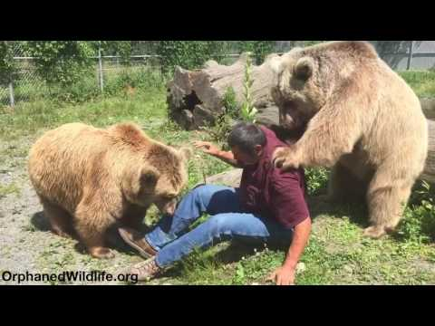 Jim and the bears