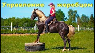 """Лошадь не слушается? Во всём """"виноват"""" всадник."""