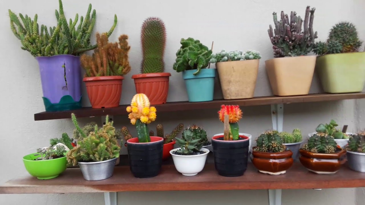 Potted Garden My 2017 succulent potted garden tour youtube my 2017 succulent potted garden tour workwithnaturefo
